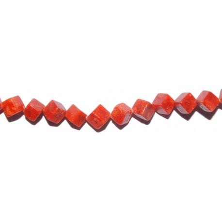 Coral Esponja dado 6 mm.